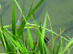 La vie de l'étang de Lavilletertre - rallye nature