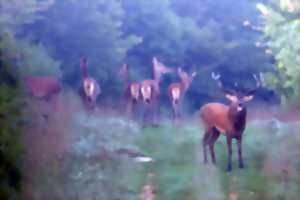Animation nature : A la rencontre du cerf