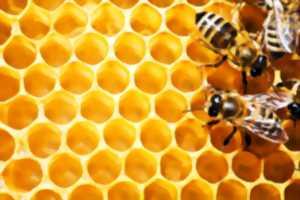 Stage abeilles - Saint-Brisson