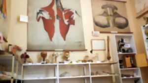 Visite Guidée du Musée de la Chirurgie Pr Christian Cabrol, à Myennes.