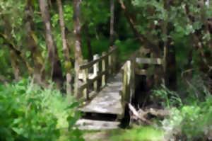 Animation nature : Les animaux n'ont pas peur du noir au Sentier des Cigognes