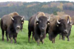 DE FERME EN FERME : AU RANCH DES BISONS
