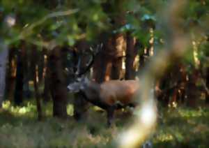 sites de rencontres gratuits cerf rouge Gauteng Alexandra site de rencontre