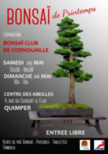 Bonsaï club Cornouaille