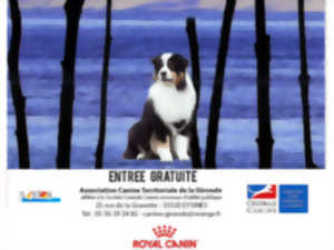 centrale canine gironde