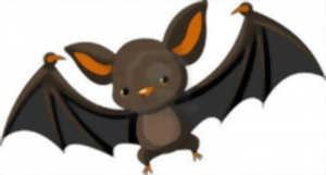 Animation nature : La chauve-souris, gardienne de la nuit