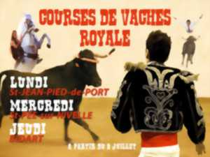 Courses de vaches royales