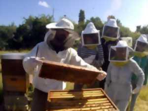 apiculteur 56130